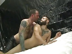 Hairy stud creams tatted pup