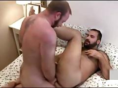 2 bears fucking