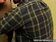 Tough Daddy Bears Blowjob