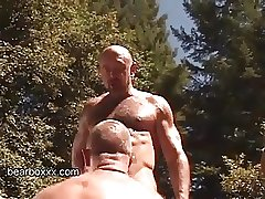 Backwoods Bears