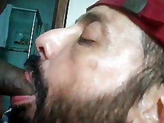 Bezerro carioca mamando os machos