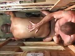 stockroom  cockroom