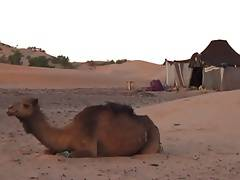 Arabian Deset Camps  3