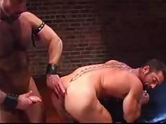 bear leather anal