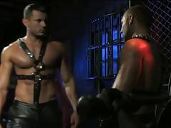 2 boys muscle leather