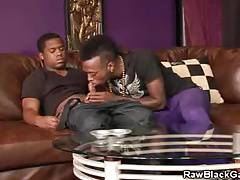 Rodney And Jay Get It On With Blowjobs