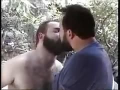 Hot Hairy Bears
